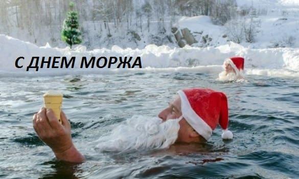 24 ноября день моржа в россии