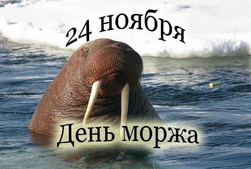 день моржа картинки