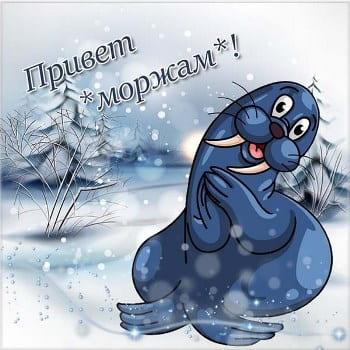 день моржа википедия