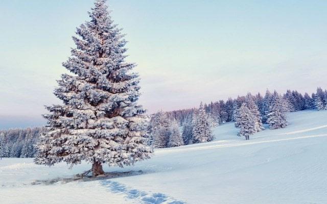 новогодние обои на рабочий стол 2019 зима