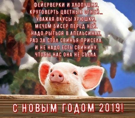 прикольные картинки со свиньей с надписями