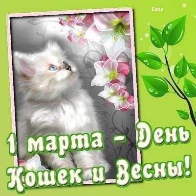 всемирный день кота поздравления