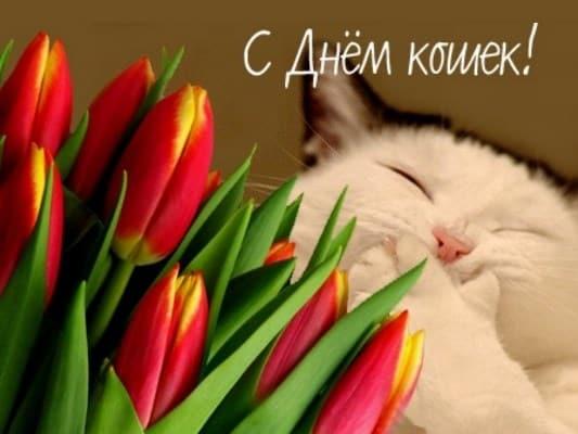 всемирный день кошек 1 марта или 8 августа