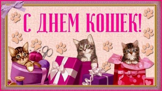 день кошек 1 марта картинки
