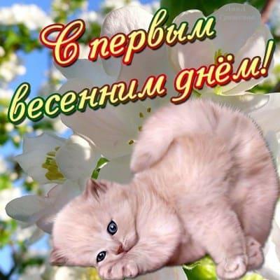всемирный день кошек поздравления