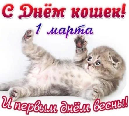 всемирный день кошек картинки прикольные