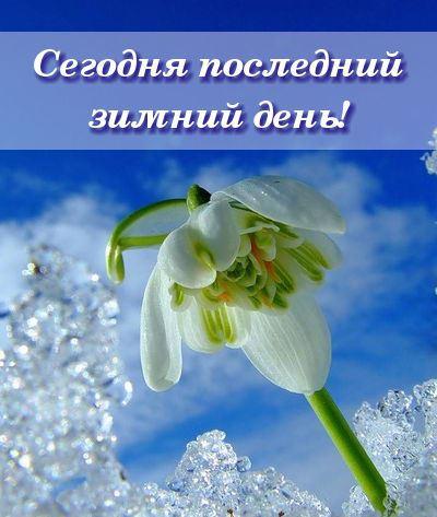 цветы подснежника