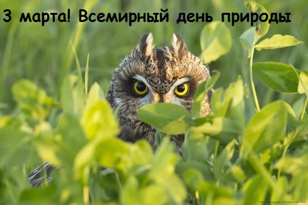 всемирный день дикой природы презентация