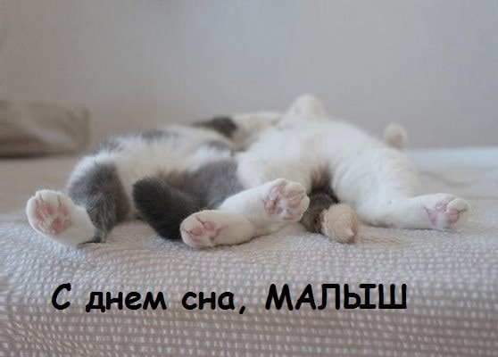 два маленьких котенка