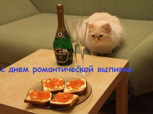 котик фото