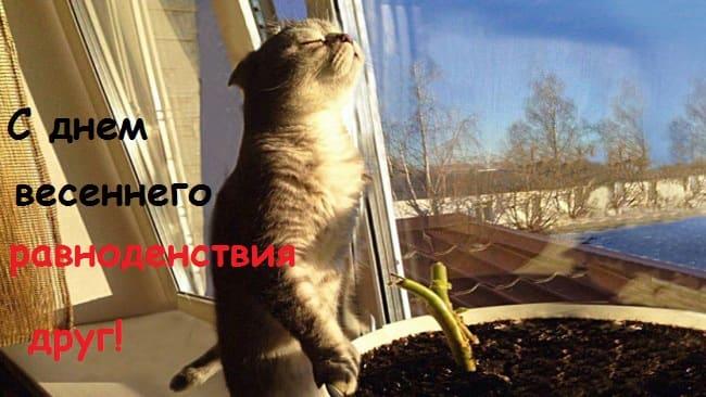 картинки про котов
