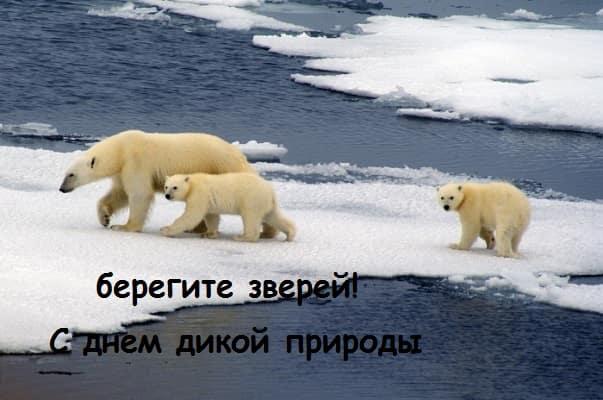 фото белых медведей