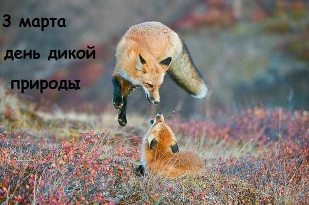 день дикой природы плакат