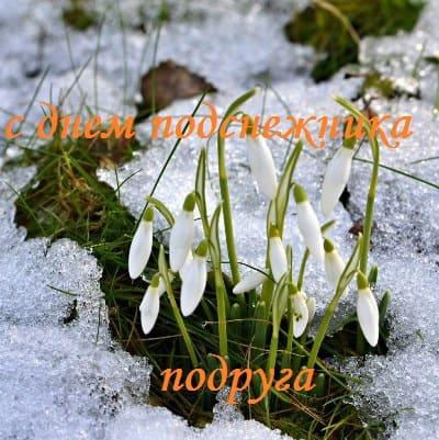 картинки с цветами зимой