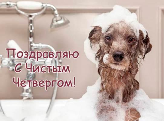 картинки с животными на чистый четверг