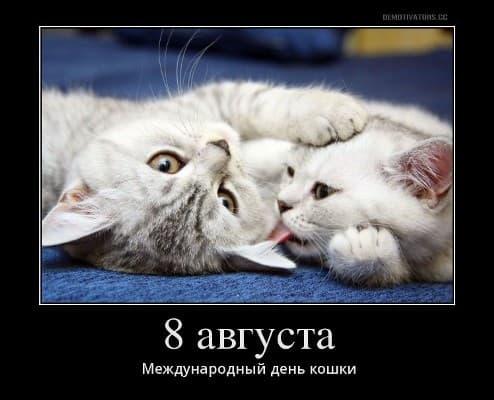 всемирный день кошек красивые картинки