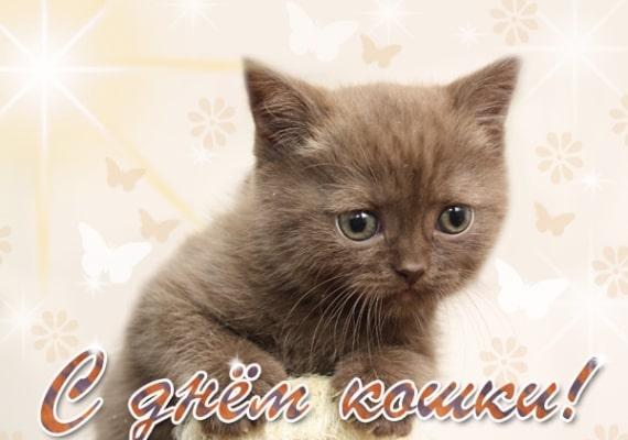 красивые открытки ко дню кошек