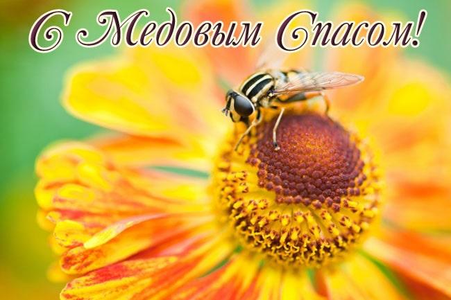 красивая картинка с подсолнухом и пчелой