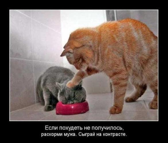 Смешные и прикольные картинки про котов и кошек