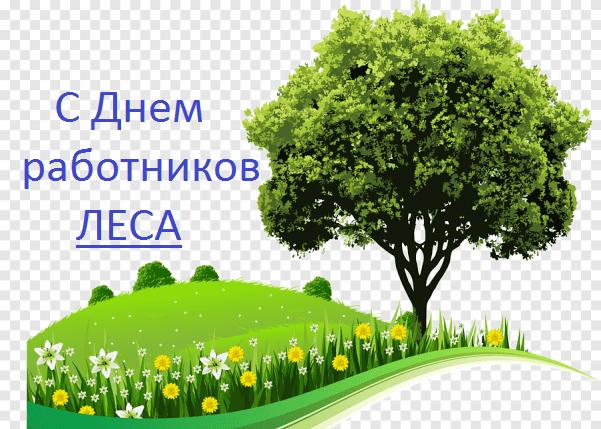 Лучшие поздравления с Днем работников леса